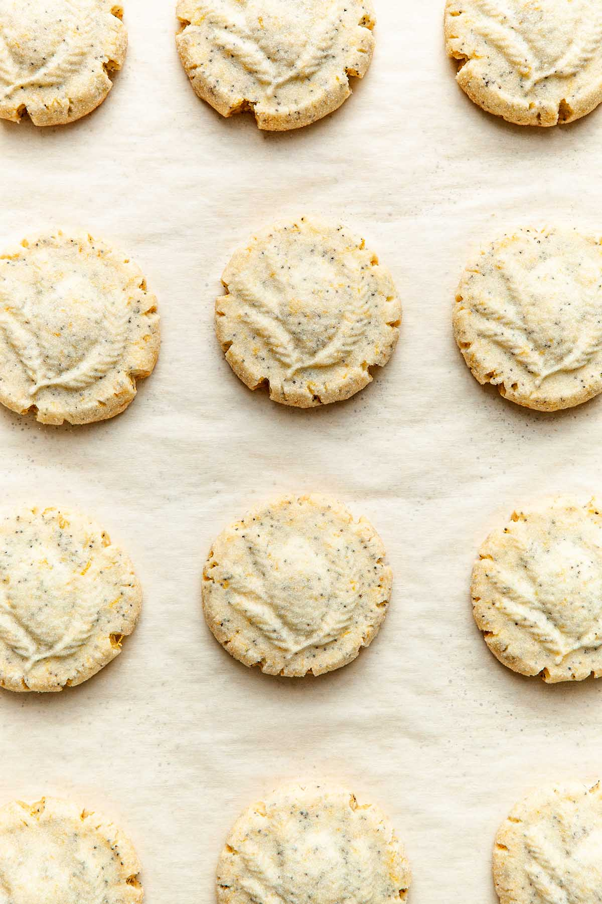 Overhead image of baked lemon poppy seed shortbread cookies on a parchment paper lined cookie sheet.