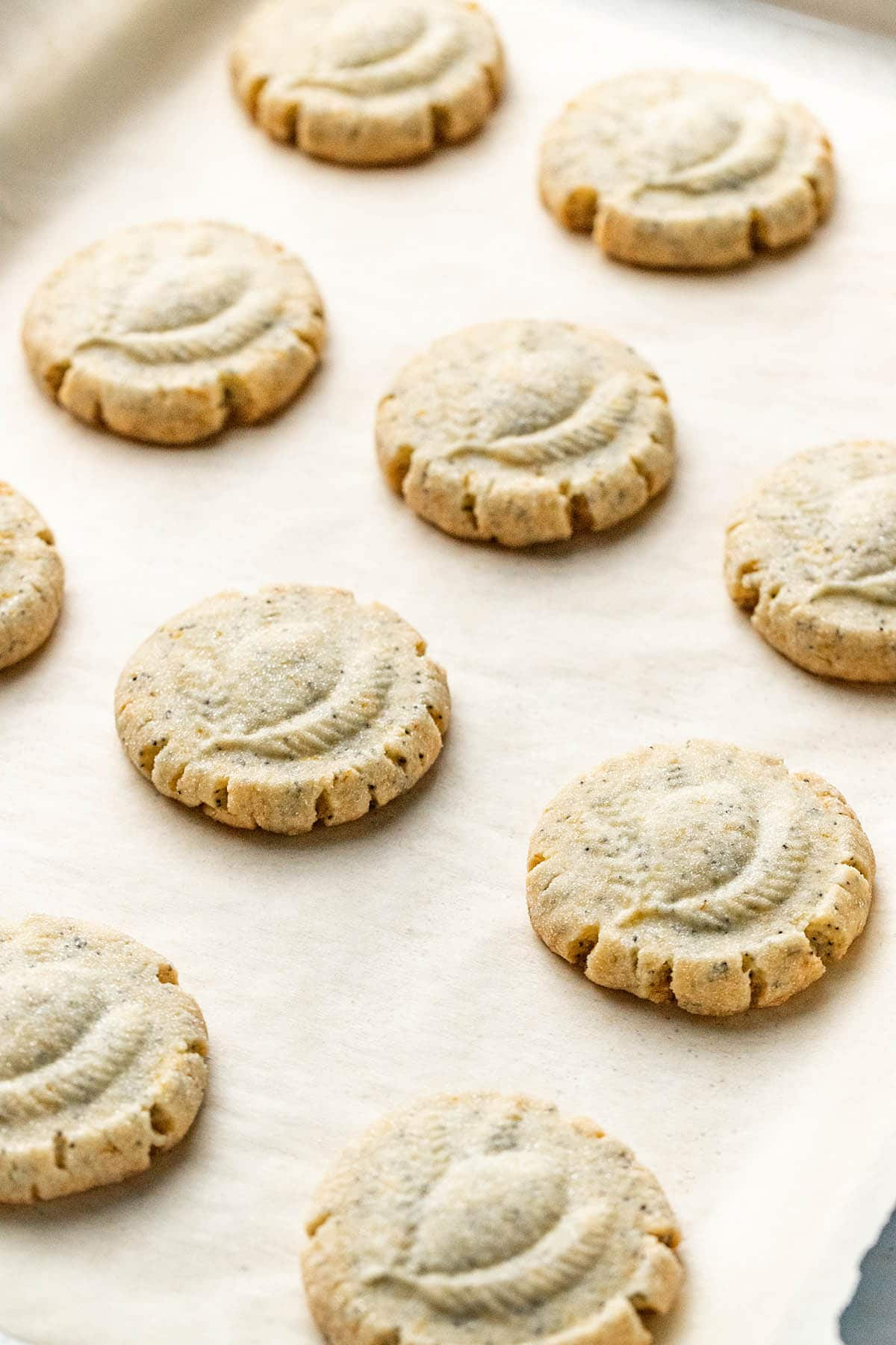 Angled shot of a tray of baked lemon poppy seed shortbread cookies.